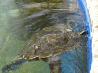 Auf der Insel Príncipe wird Naturschutz groß geschrieben