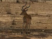 Safari-Unlimited Teil 3: Adrenalinkicks auf Walking Safaris