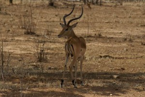 Safari-Unlimited Teil 3: Adrenalinkicks auf Walking Safaris